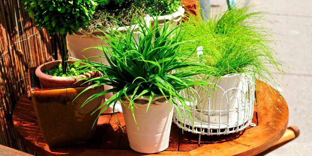 Devis jardin batibouw plus for Devis amenagement jardin